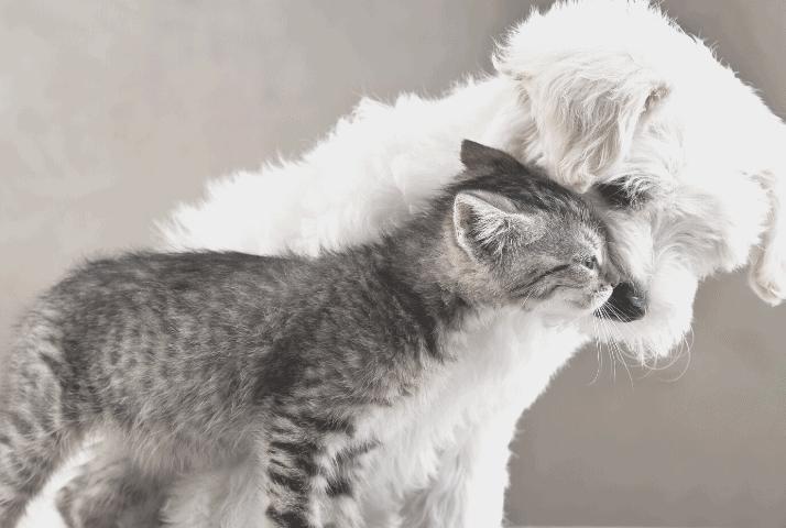 Suplementy dla zwierząt