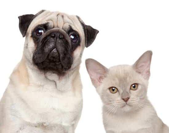 suplementy dla psów i kotów